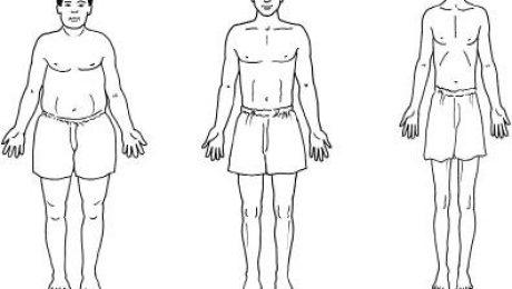 ektomorfik mezomorfik endomorfik